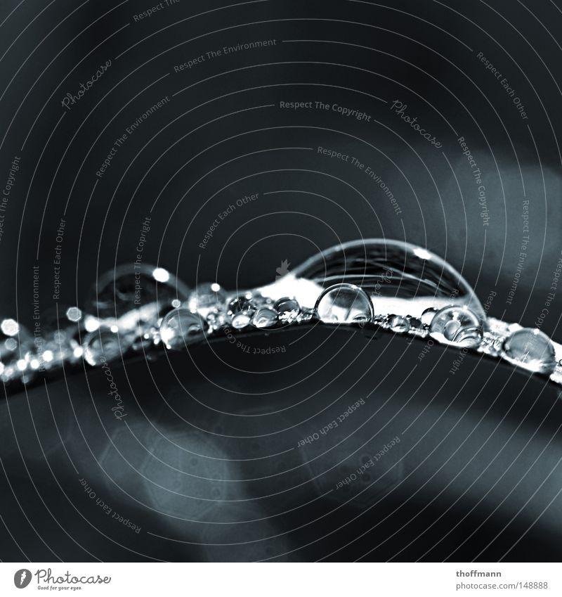 Eine Perle der Natur Sommer Wasser Blatt Gras Wassertropfen nass nah Flüssigkeit feucht Wasserspiegelung Wölbung Oberflächenspannung
