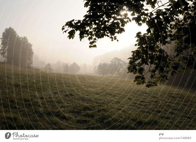 brodem Nebel Nebelschleier Smog Morgen Sonnenaufgang hell Wiese Gras Weide Baum Sträucher Ast Blatt Natur authentisch Landschaft Feld Frieden ruhig harmonisch