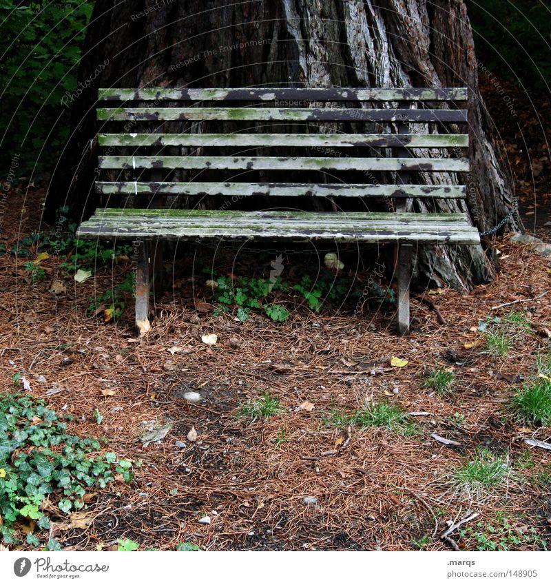 Die Bank ihres Vertrauens Natur alt Wald Erholung Herbst Holz Park braun Sicherheit Tourismus Pause Schutz verfallen Wirtschaft