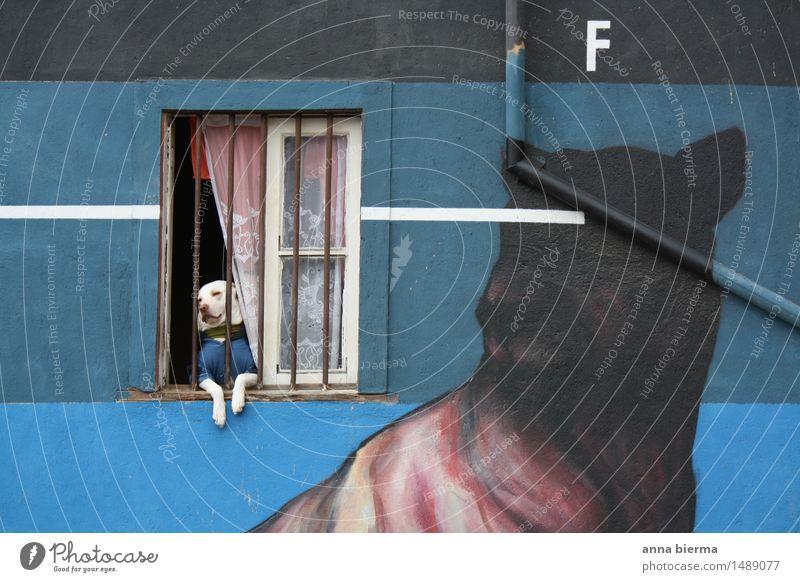 hund Hund blau Tier Haus Fenster Wand Architektur Graffiti Gebäude Mauer Kunst Fassade Wohnung träumen Angst bedrohlich