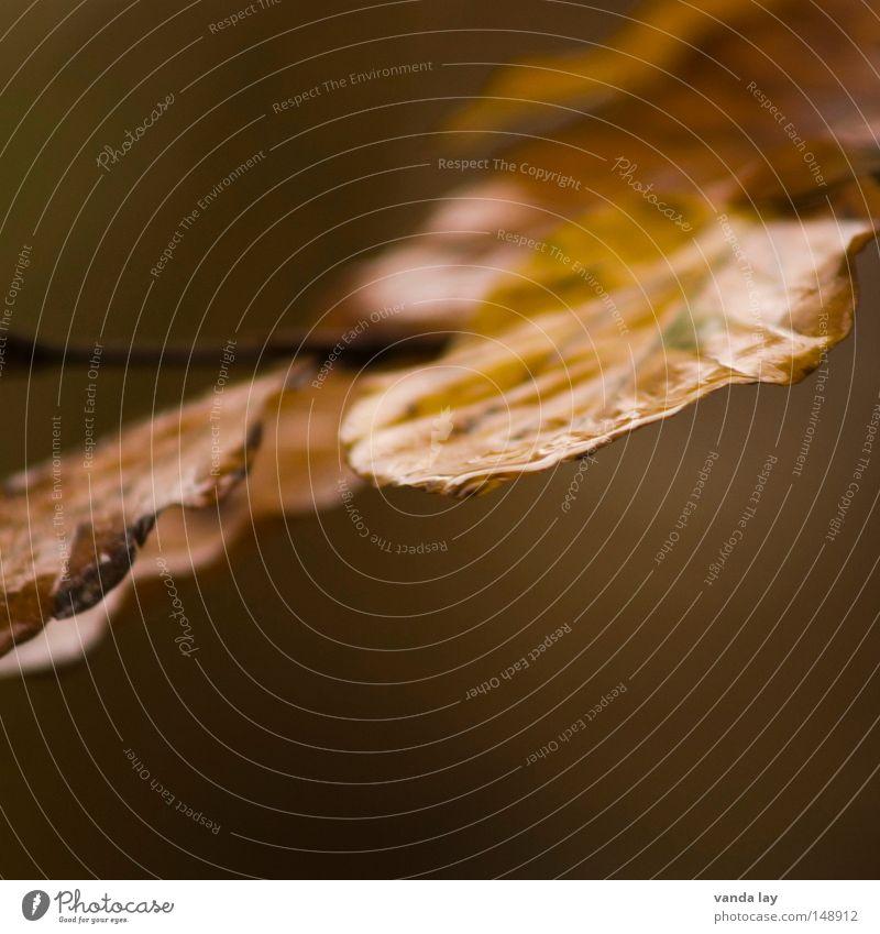 Blätter Blatt Herbst feucht Regen Buche Laubwald Ast Wassertropfen Tropfen braun Stimmung Natur Pflanze Baum Umwelt Oktober November Detailaufnahme