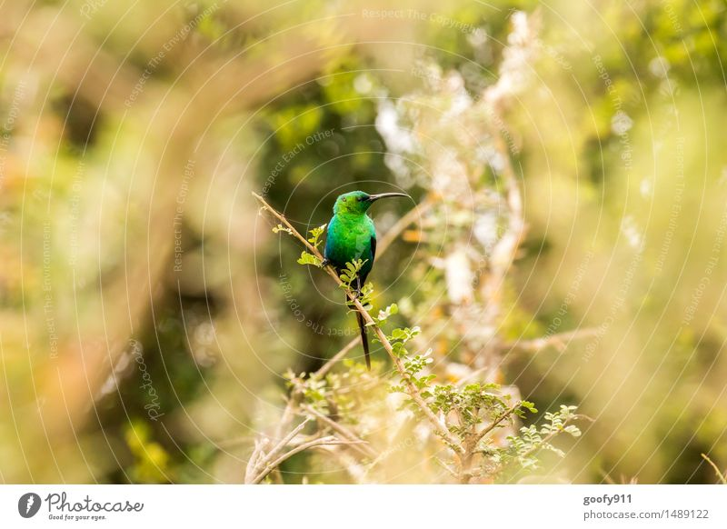 KOLIBRI Umwelt Natur Landschaft Sommer Schönes Wetter Baum Sträucher Grünpflanze Park Tier Wildtier Vogel Tiergesicht Flügel Zoo Kolibri 1 Holz