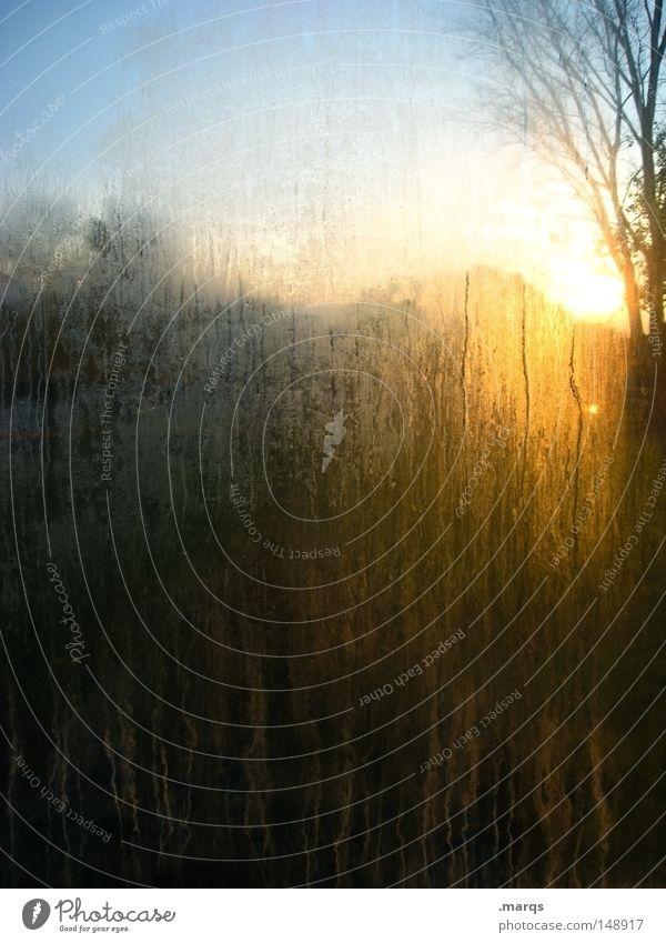 Schmutziger Abgang Sonne Einsamkeit dunkel Herbst Garten träumen Traurigkeit dreckig Glas Trauer Wandel & Veränderung Sehnsucht außergewöhnlich Schmerz
