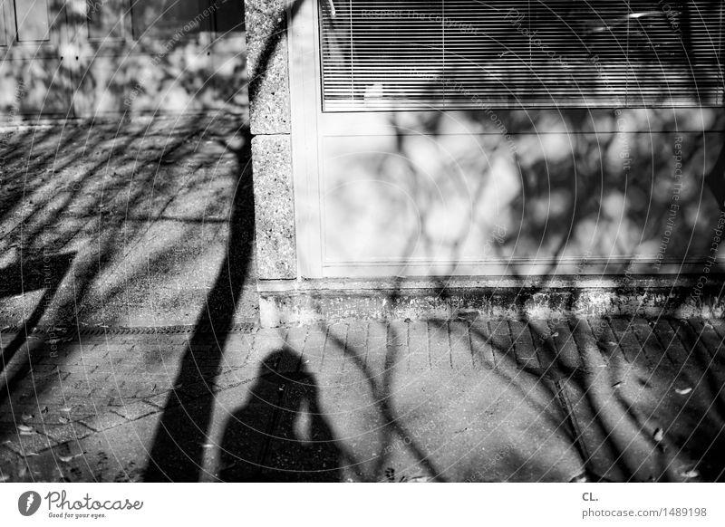 schatten Freizeit & Hobby Mensch Erwachsene 1 Umwelt Natur Schönes Wetter Baum Ast Mauer Wand Fenster Jalousie komplex Fotografieren Schwarzweißfoto