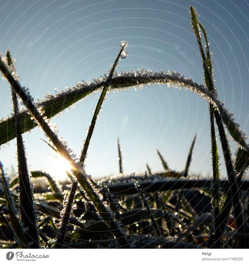 gefroren... Himmel weiß grün blau Sonne Winter Wolken kalt Schnee Wiese Herbst Gras Eis Beleuchtung glänzend Frost