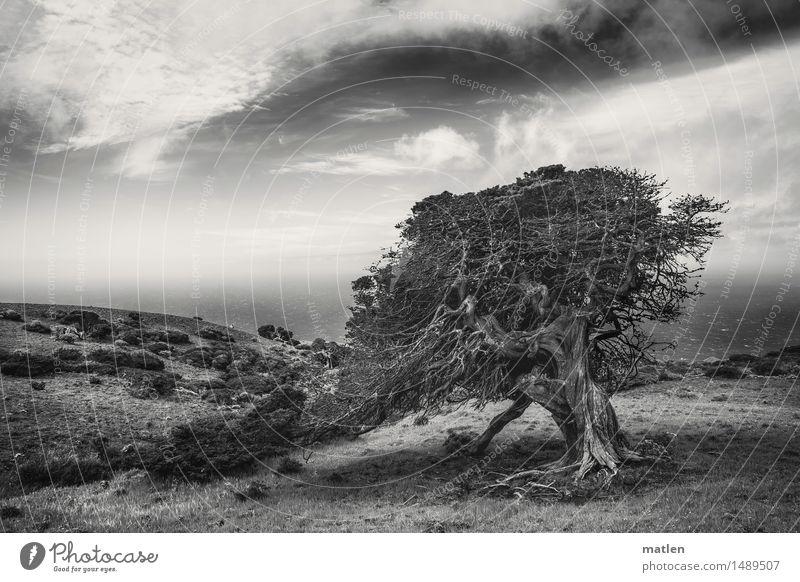 s/w | Trotz Himmel Natur Pflanze Wasser weiß Baum Meer Landschaft Wolken schwarz Berge u. Gebirge Umwelt Frühling Gras Küste Felsen