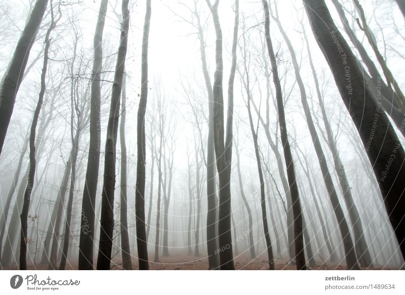 Hochwald Wald hoch Hochsitz Buche Buchenwald Natur Landschaft Baum Baumstamm Ast Zweig Winter Herbst Nebel Dunst Textfreiraum Menschenleer Himmel (Jenseits)