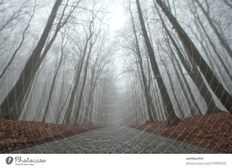 Straße Wald hoch Hochsitz Buche Buchenwald Natur Landschaft Baum Baumstamm Ast Zweig Winter Herbst Nebel Dunst Textfreiraum Menschenleer Himmel hell
