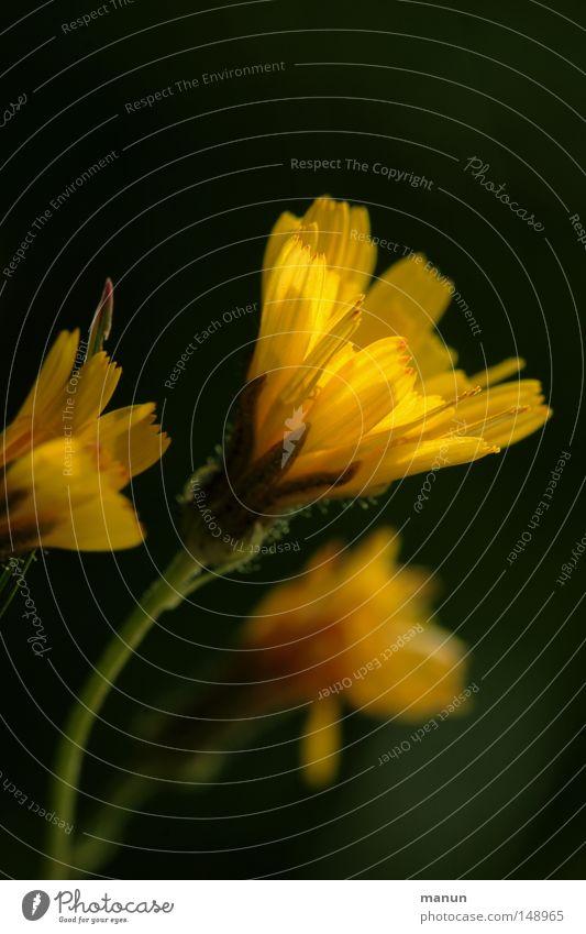 Septemberblüte Natur schön Blume Sommer gelb Lampe Herbst Blüte Park Wärme Graffiti gold Physik Blühend Schönes Wetter