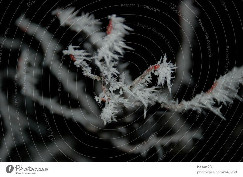 frozen Natur Baum Winter kalt Schnee Landschaft Raureif