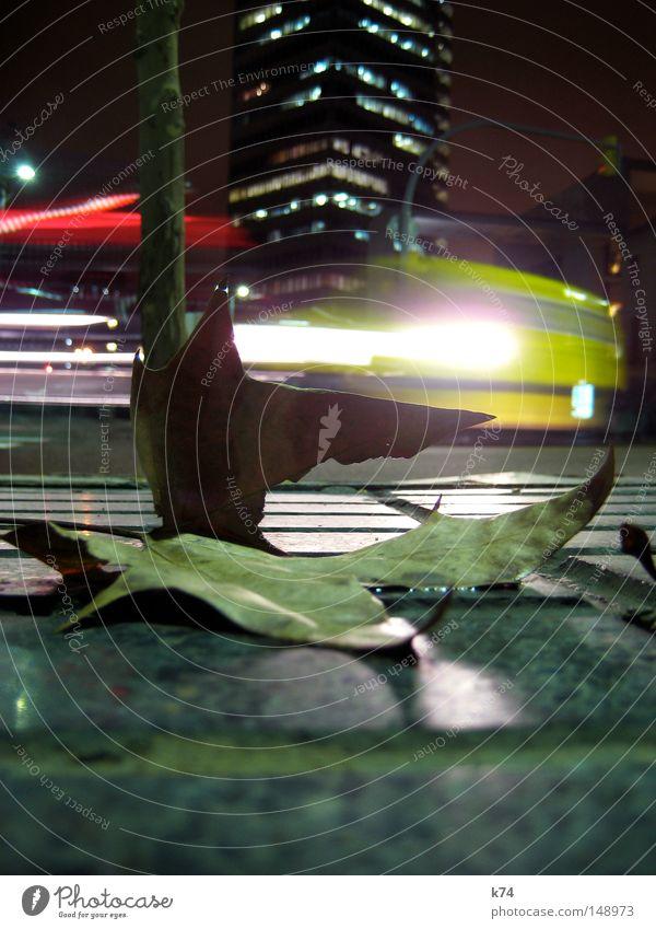 Parallelwelten Blatt Straße Stadt Straßenmusiker singen Tanzen Bühne Baum KFZ trampen Verkehr Anhalter Licht hell Scheinwerfer Lightshow Autoscheinwerfer