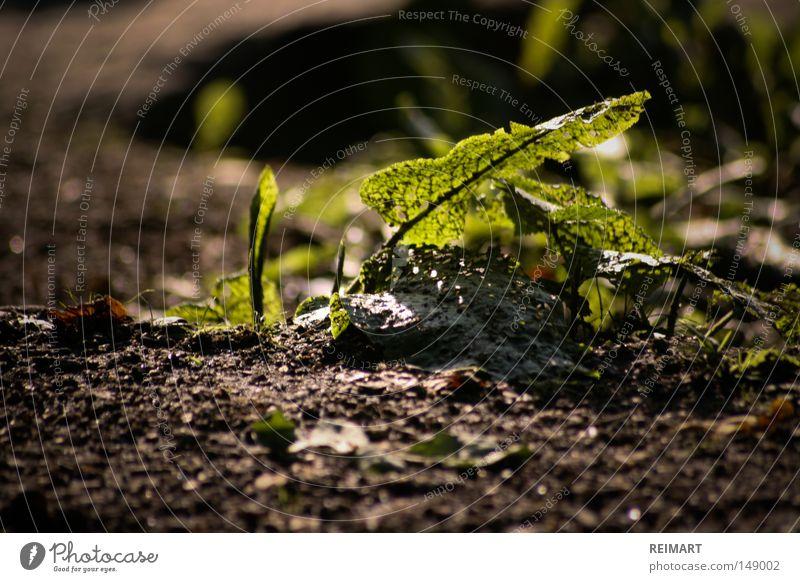 vierzehn Waldboden Sommer Natur grün Blatt aufwachen Wachstum klein