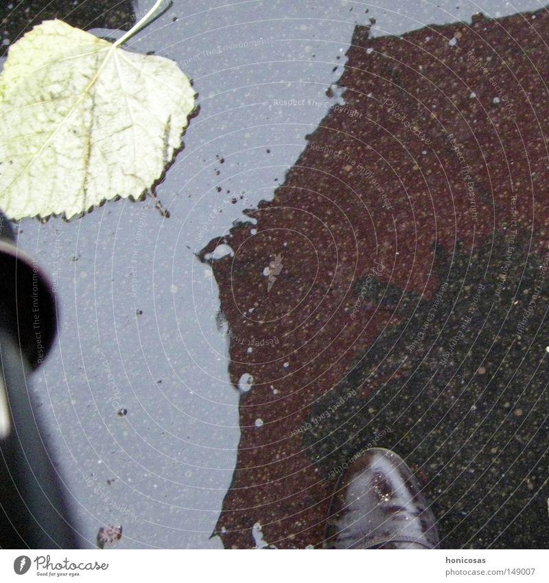 Wenn es regnet nass Blatt Regenschirm Schuhe Stiefel Reflexion & Spiegelung Spiegelbild einweichen Herbst Straße