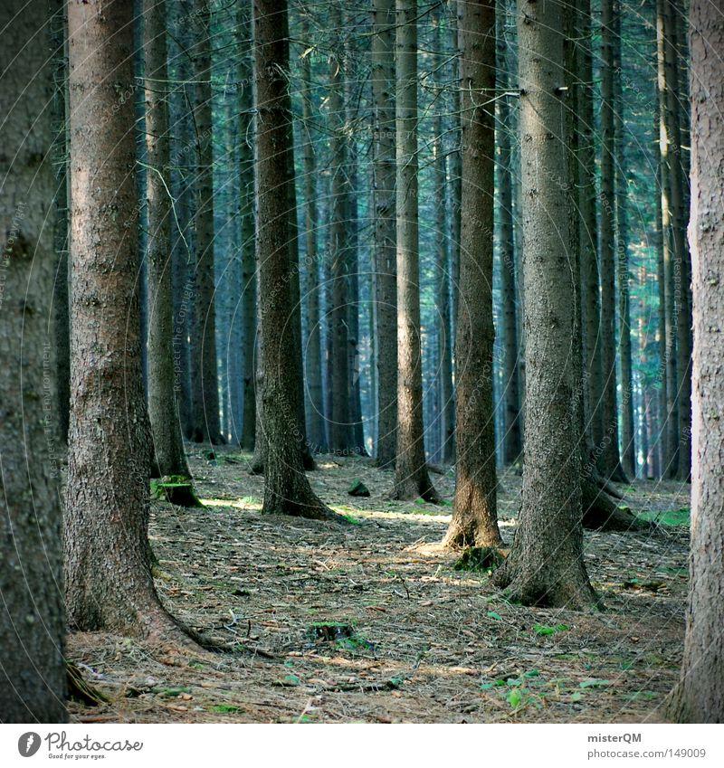 """""""Ikearegal von morgen"""" und """"Warum Rotkäppchen keinen Sekt mag!"""" Natur alt Baum Erholung Einsamkeit Landschaft dunkel Wald Umwelt Herbst Holz Zeit Freiheit Wachstum mehrere hoch"""