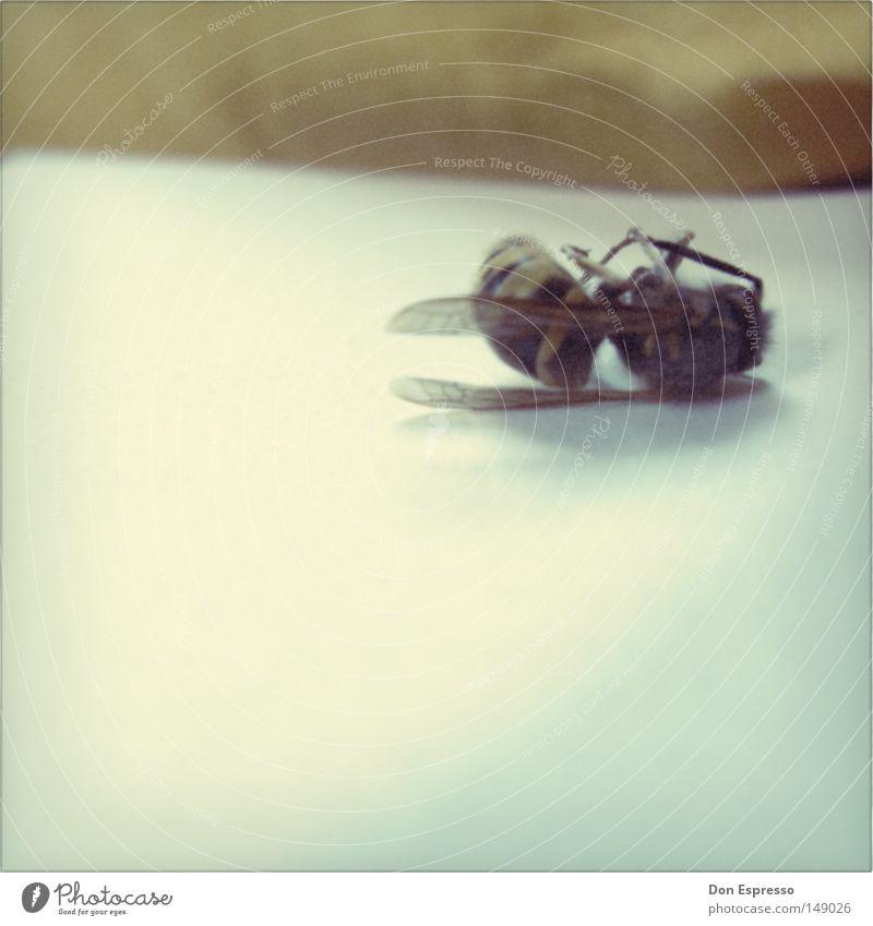 Summer is gone Wespen Insekt stechen Stachel fliegen Flügel Tod Polaroid Vergänglichkeit vergangen Vergangenheit früher alt retro bleich Leiche Gift Sommer