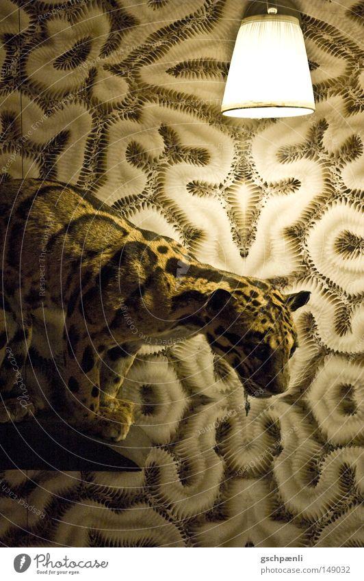 Oma's Büsi alt Tier Lampe Wand Katze Wärme braun lustig Dekoration & Verzierung Physik wild außergewöhnlich Neugier Tapete Wildtier Wohnzimmer