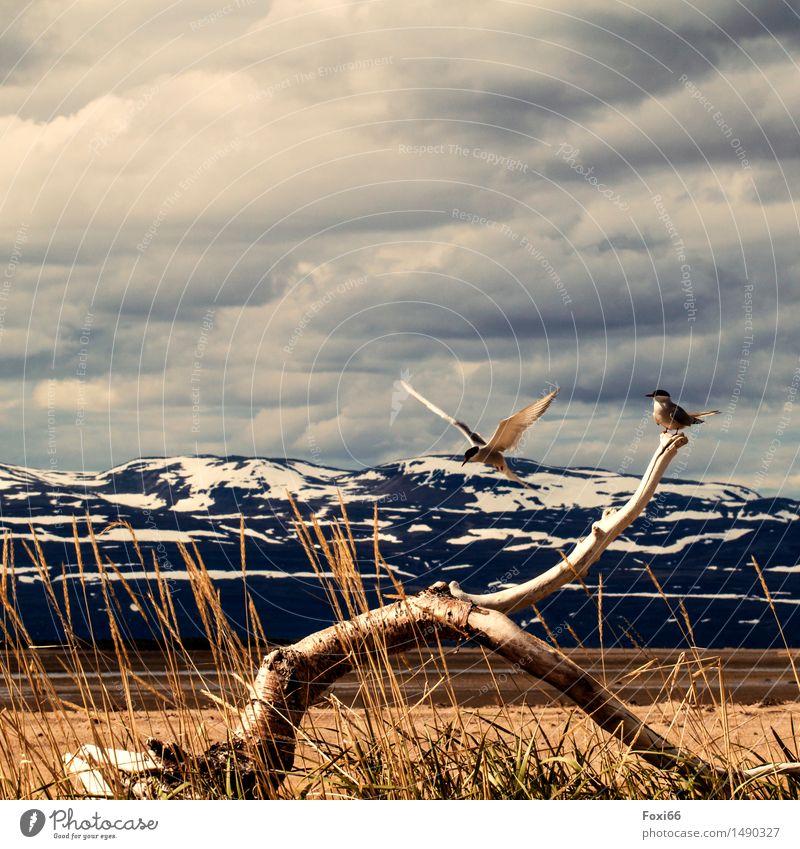 Anflug Abenteuer Ferne Freiheit Berge u. Gebirge wandern Pflanze Tier Wolken Sommer Klima Klimawandel Gras Wildpflanze Schneebedeckte Gipfel Fjord Norwegen Holz