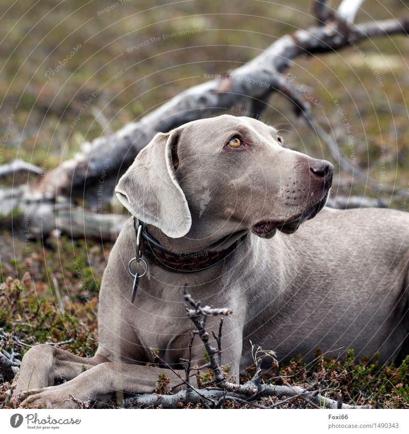 Tia ....für Nordreisender Hund Natur grün Sommer Baum Tier Ferne Berge u. Gebirge Holz Glück grau braun Metall Zufriedenheit Erde wandern