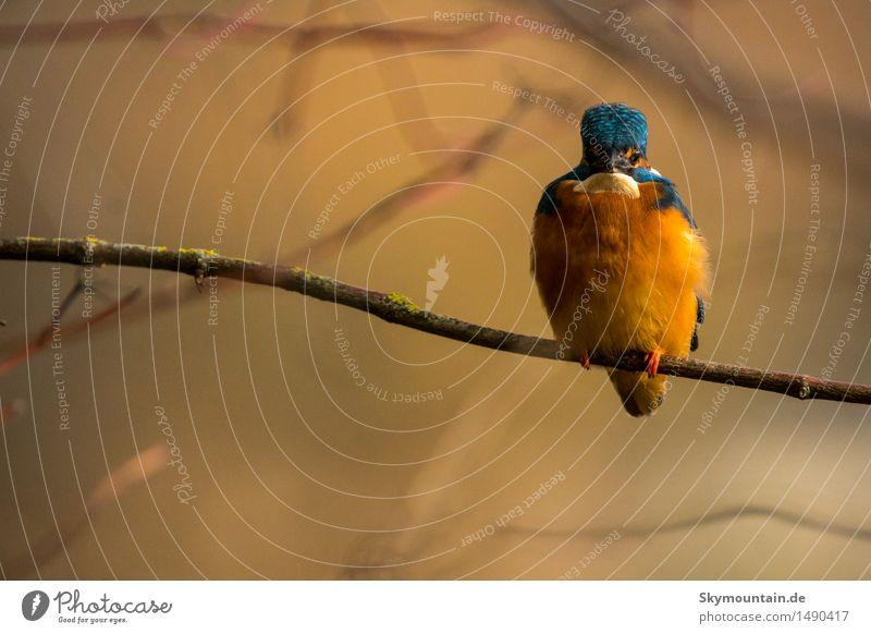 Fast nicht zu sehen, wenn da nicht das Blau wäre Natur blau weiß Baum Tier Strand schwarz Umwelt See Vogel orange Wetter Wildtier Klima Schönes Wetter Fluss