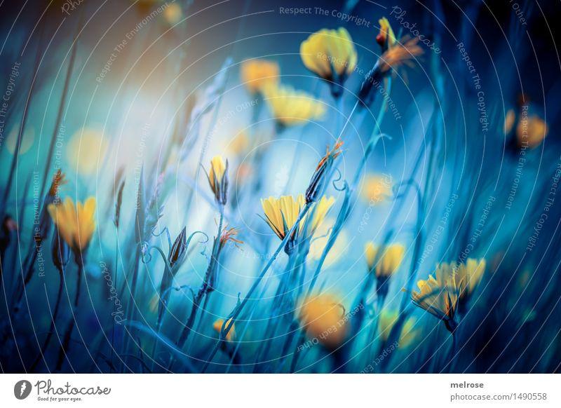 ... somewhere else ... Stil Design Natur Landschaft Herbst Schönes Wetter Pflanze Blume Blüte Wildpflanze Huflattich Korbblütengewächs Blütenpflanze Feld