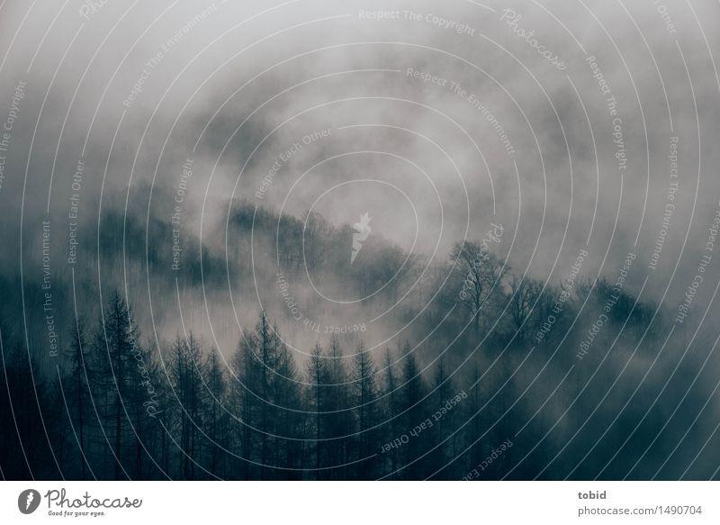 Regenwetter Natur Landschaft Urelemente Wolken Herbst Winter schlechtes Wetter Nebel Baum bedrohlich dunkel kalt Einsamkeit einzigartig Endzeitstimmung Farbfoto