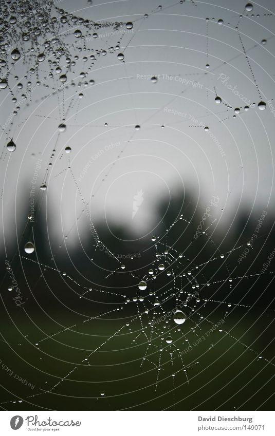Tropfenwerk Himmel Natur Wasser schön Wiese Regen Wetter Nebel Wassertropfen Kreis Schnur Klarheit Tropfen Netz Spiegel Insekt