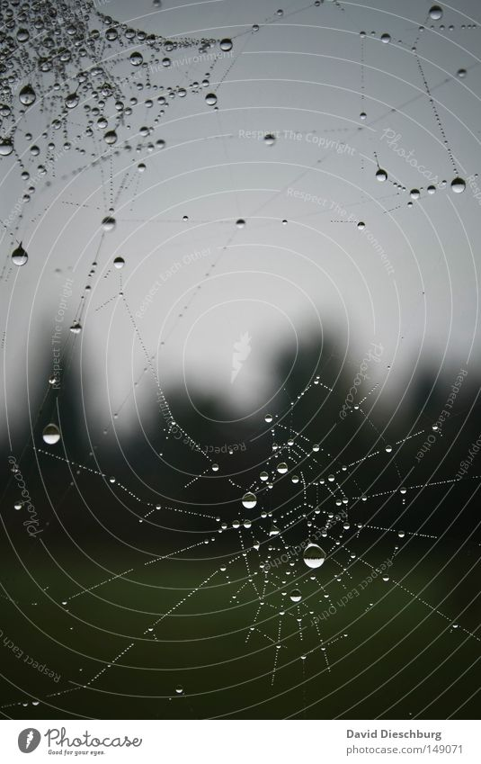 Tropfenwerk Himmel Natur Wasser schön Wiese Regen Wetter Nebel Wassertropfen Kreis Schnur Klarheit Netz Spiegel Insekt