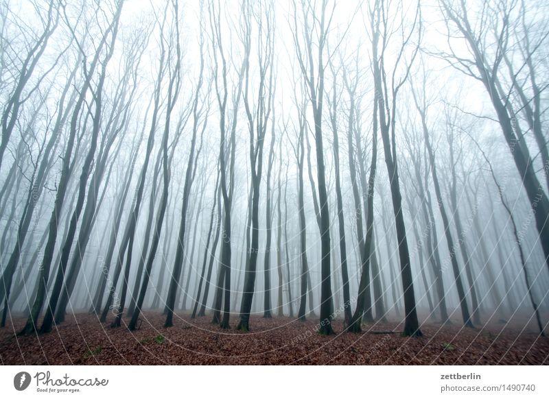 Buchenwald Wald hoch Hochsitz Natur Landschaft Baum Baumstamm Ast Zweig Winter Herbst Nebel Dunst Textfreiraum Menschenleer Himmel hell geheimnisvoll
