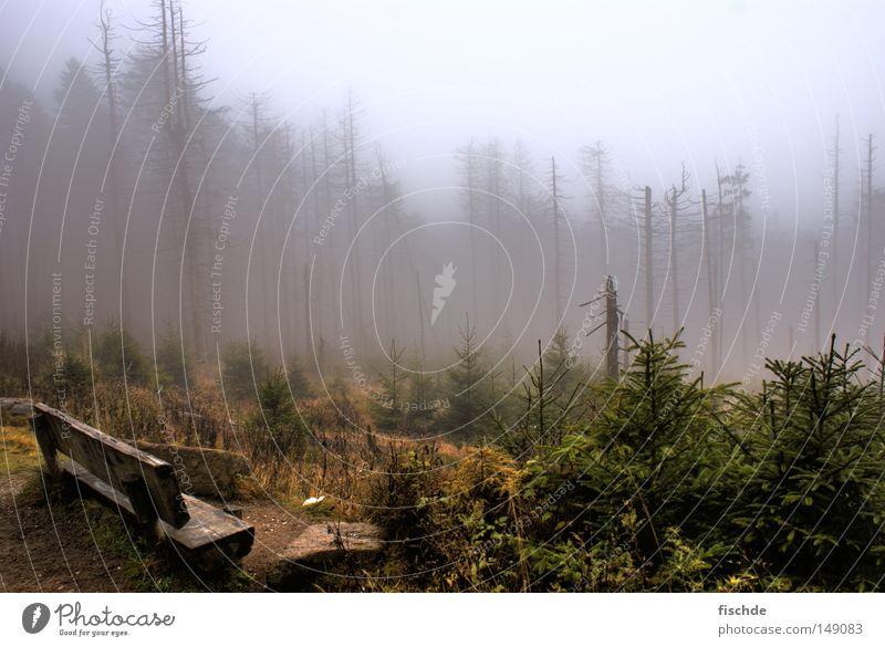 düstere aussichten Wald Blatt Nebel kalt Pause wandern Baum Nadelwald Fichte dunkel Aussicht Hügel Schuhe Wanderschuhe Holz Natur Bergsteigen Bank Bruchstück