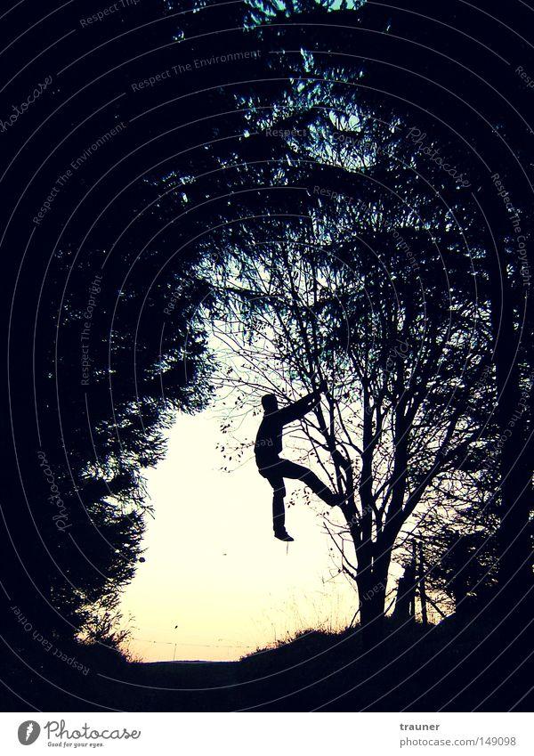 Der Herr der Bäume Mensch Himmel Mann Baum Sonne Blatt Erwachsene Wald Herbst Wiese Tod dunkel Landschaft Berge u. Gebirge springen ästhetisch