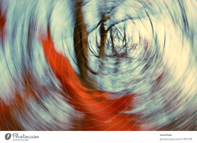 im strudel der jahreszeiten Wald Baum Baumstamm Ast Himmel Herbst Saison Winter abstrakt Natur Landschaft Unterholz Luft rot Blatt Unschärfe träumen gedreht