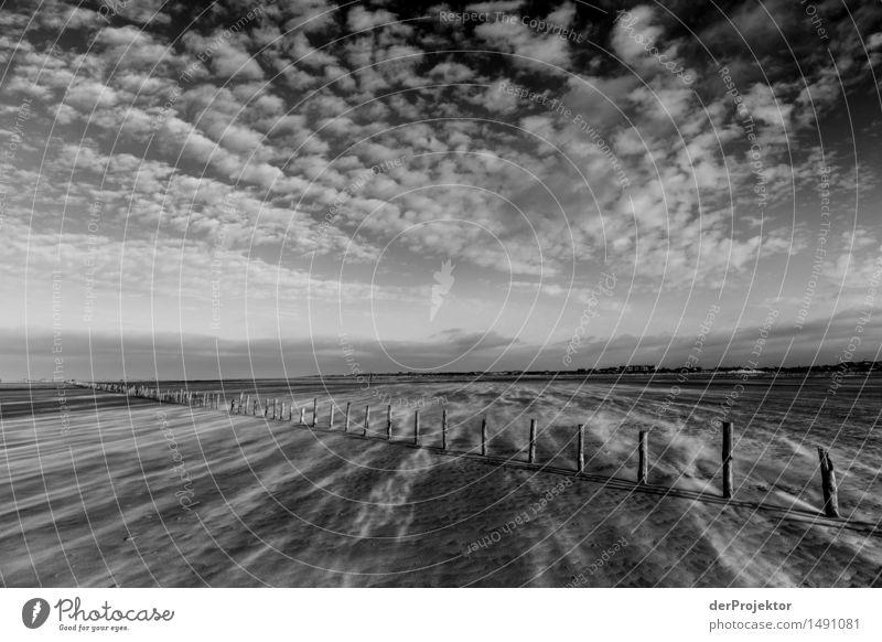 Flacher Sandsturm Natur Ferien & Urlaub & Reisen Pflanze Landschaft Wolken Tier Freude Ferne Winter Umwelt Gefühle Küste Freiheit Tourismus wandern Wellen