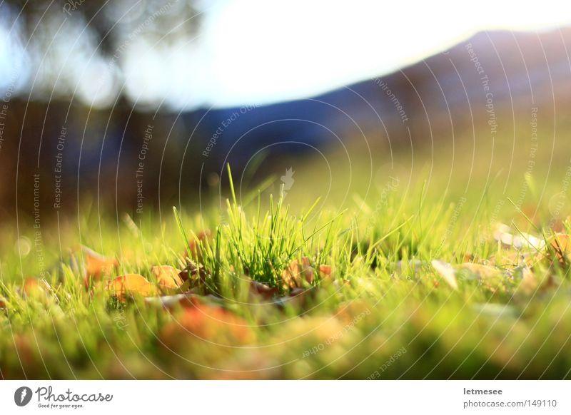 letztes grün '08 Garten Berge u. Gebirge Gartenzaun Wiese Gras Blatt frisch Sonne große Blende Unschärfe Park