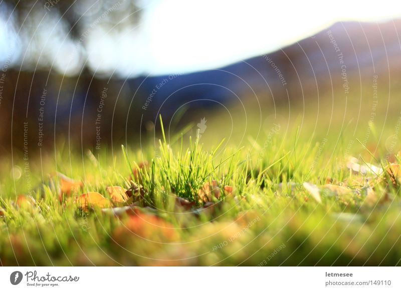 letztes grün '08 Sonne Blatt Wiese Gras Berge u. Gebirge Garten Park frisch Gartenzaun große Blende