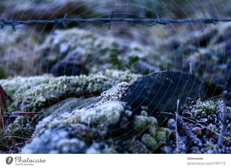 Barbed Wire Stacheldraht Eisen Zaun Frost kalt Boden gefroren Bergwiese stachelig Spitze Moos weich grün Stein feucht Sicherheit gefangen Garten Park Kuhzaun