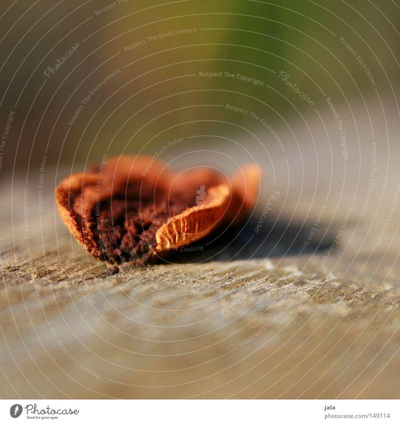schwammerl Natur Holz braun orange Pilz Tiefenschärfe