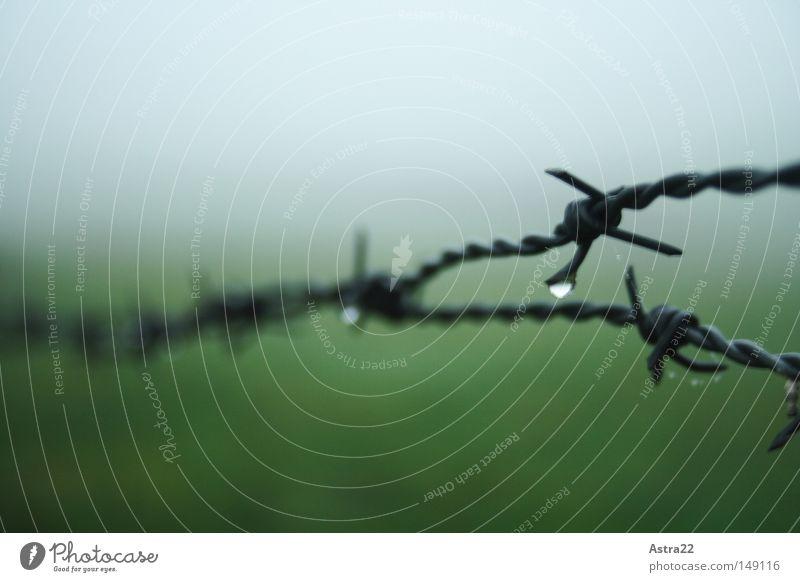 Winterstimmung Freiheit Wassertropfen Herbst Nebel Regen Wiese Feld Linie Tropfen nass stachelig grün Stacheldraht Draht Zaun Tau Grenze Weide stechen piecken
