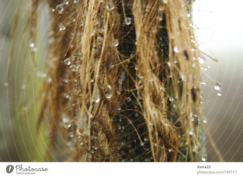 Tauwerk Wasser grün Pflanze Winter Herbst Wiese Holz Regen Feld Nebel Wassertropfen nass Tropfen Weide
