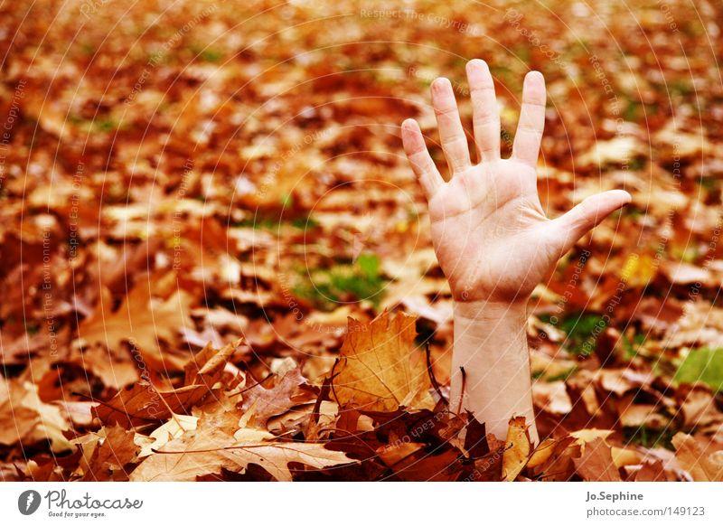 automne et les morts-vivants Hand Herbst gruselig Angst untot Schrecken winken gestikulieren verstecken Herbstlaub Panik high five Arme Blick außergewöhnlich