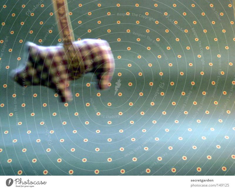spider schwein Schwein Sau Glücksschwein Kunst Muster penibel kariert Ferkel Weihnachten & Advent grell Kitsch obskur Märchen assoziativ schön süß niedlich