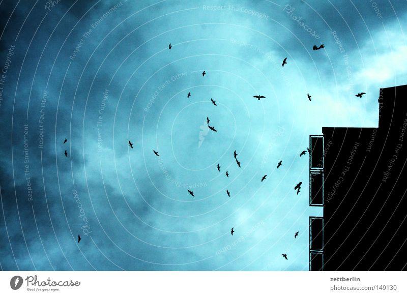 Vögel Abend Dämmerung Himmel Vogel Wolken Haus Tiefdruckgebiet Herbst Sturm Herbststurm Vogelschwarm Schlafplatz Suche fliegen Vogelauge Vogeljagd Vogelkopf