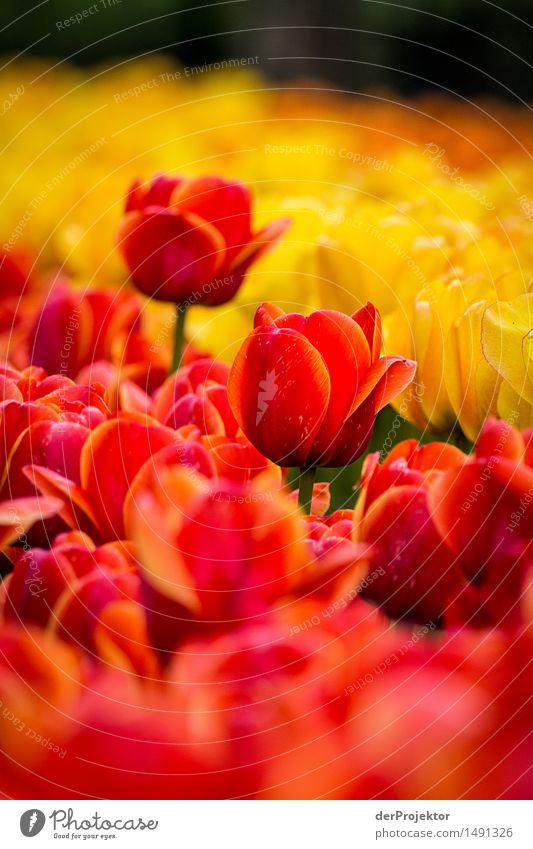 Zwei tanzen immer aus der Reihe Umwelt Natur Landschaft Pflanze Frühling Schönes Wetter Blume Garten Park Feld Gefühle Freude Lebensfreude Frühlingsgefühle