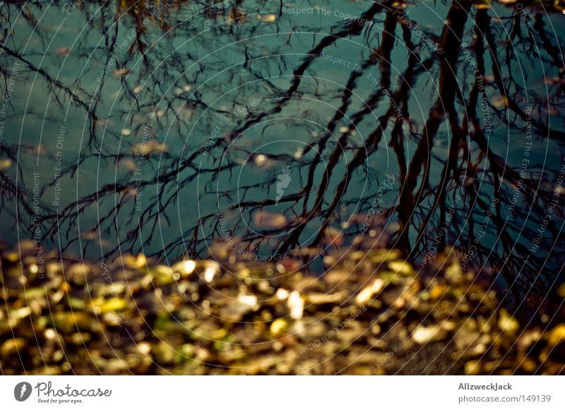 Hauptstadtherbst 2 Wasser Baum Blatt gelb Herbst Trauer Vergänglichkeit Verzweiflung Pfütze Regenwasser Geäst