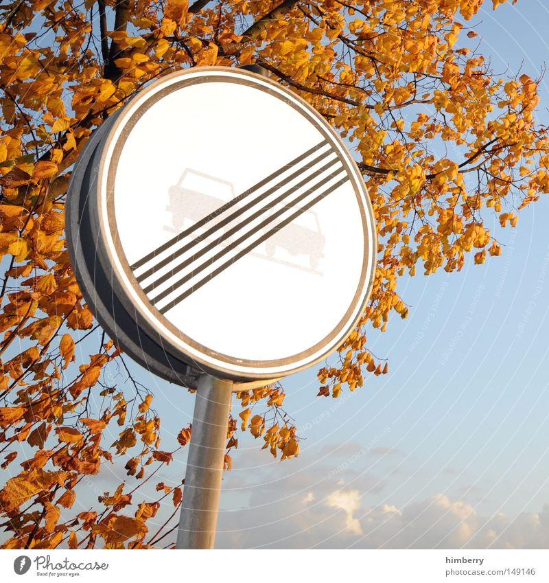 burnout Herbst Blatt Baum gold gelb grün Natur Strukturen & Formen Hintergrundbild Himmel Straßennamenschild Geschwindigkeit Geschwindigkeitsbegrenzung Ausflug