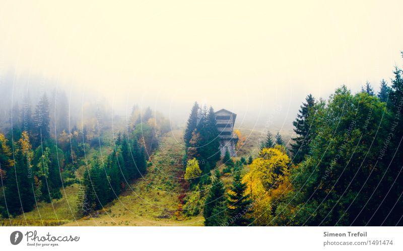 Schwarzwald im Herbst Abenteuer wandern Natur Landschaft Nebel Baum Gras Wald Hügel Berge u. Gebirge Ferien & Urlaub & Reisen alt dunkel frei kalt kaputt