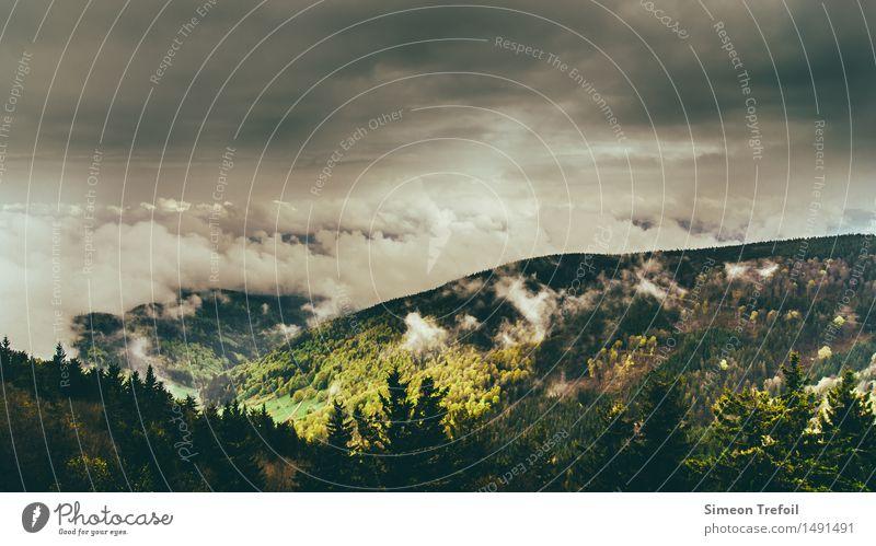 Schwarzwald im Nebel III Natur Ferien & Urlaub & Reisen grün Baum Landschaft Einsamkeit Ferne Wald Berge u. Gebirge Herbst Freiheit braun Horizont Regen