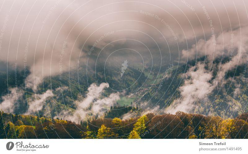 Schwarzwald 4 Natur Ferien & Urlaub & Reisen Landschaft Einsamkeit Blatt ruhig Ferne Wald Berge u. Gebirge Umwelt gelb Freiheit braun Regen wild Nebel
