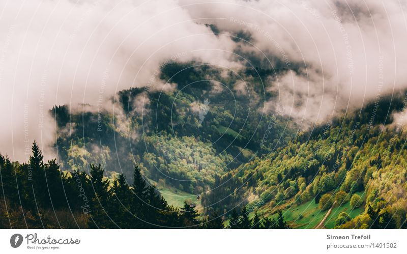 Schwarzwald 3 Ferien & Urlaub & Reisen grün Einsamkeit ruhig Wolken Ferne Berge u. Gebirge gelb Herbst Wege & Pfade Freiheit braun wild Nebel wandern Kraft
