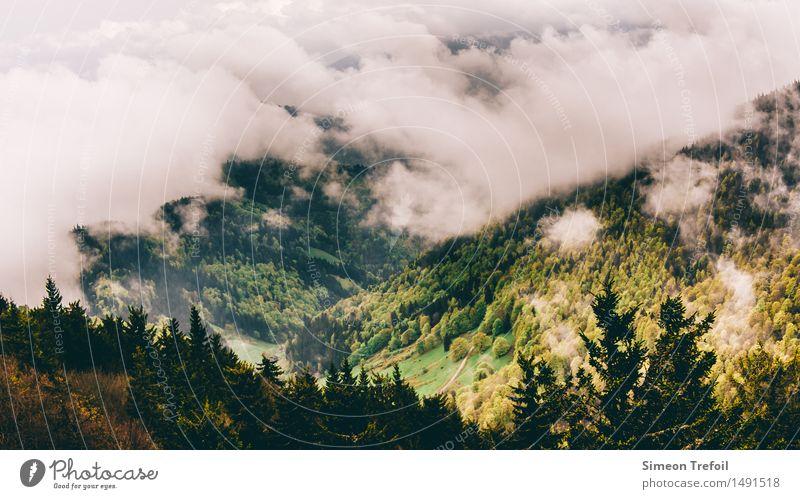 Schwarzwald ruhig Ausflug Ferne Freiheit Expedition Berge u. Gebirge wandern Landschaft Wolken Herbst schlechtes Wetter Nebel Hügel Felsen dunkel kalt nass
