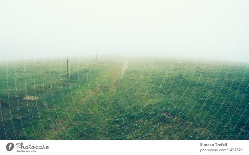 Weide im Nebel Natur grün Landschaft Einsamkeit dunkel kalt gelb Herbst Wiese Wege & Pfade Gras braun Feld Wachstum wandern